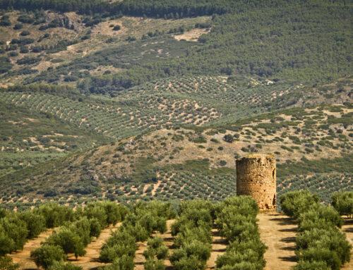 ADSUR impulsa el proyecto de cooperación para la «mejora de la sostenibilidad oleícola en las Comarcas Jiennenses»